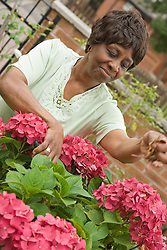 Older Woman dead heading her flowers in her garden,