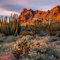 Sunset, Organ Pipe N.M., Arizona