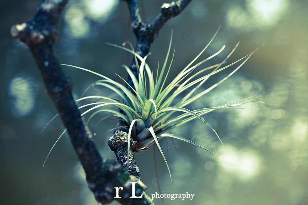 rL photography & cinematography, www.rachaellevine.net, www.rachaellevine.com, best photography, best cinematography