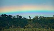 Forest breath, in technicolor.