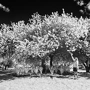 Admiring The Blossoms - San Francisco Botanical Gardens - Black & White
