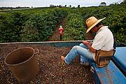 Paraguacu_MG, Brasil...Homens trabalhando na colheita de cafe em Paraguacu...Men working coffee crop in Paraguacu...Foto: JOAO MARCOS ROSA / NITRO