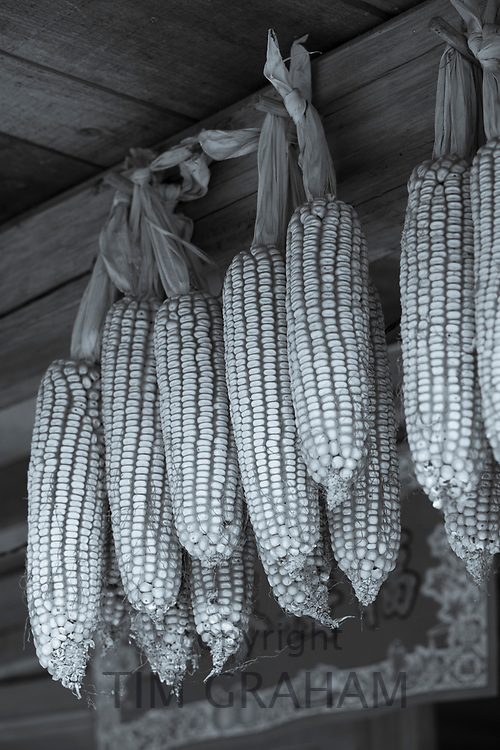 FINE ART PHOTOGRAPHY by Tim Graham<br /> FOOD - Corn on the Cob
