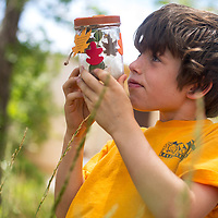 """062413       Brian Leddy<br /> Alec Balabanis inspects an insect in his bug jar Monday at Jefferson Elementary. Balabanis is one of several students taking a class called """"Insects and Habitats"""" offered through the University of New Mexico-Gallup."""
