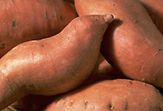 Close up, selective focus photograph of a group of Red Sweet potatoes