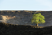 Lush tree in the agricultural lands in the Gheralta Mountains, Tigray region. Ethiopia, Horn of Africa