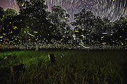 Fireflies light a country cemetery while stars circle above. Consider the energy fireflies use to make their light – star power!