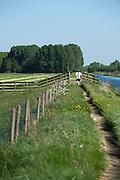 Natuurgebied langs Papenpad tussen Alphen aan den Rijn en Rietveld - Nature near Alphen aan den Rijn