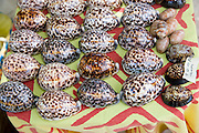Cowrie shells<br />