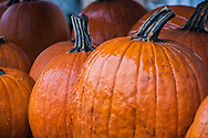 """A chill October rain adds a glossy sheen to the bright orange pumpkins at a rural farm stand.<br /> <br /> For IMAGE LICENSING just click on the """"add to cart"""" button above.<br /> <br /> Fine Art archival paper prints for this image as well as canvas, metal and acrylic prints available here:"""
