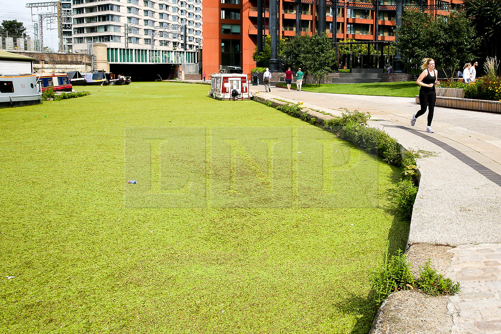 © Licensed to London News Pictures. 03/08/2019. London, UK.A jogger jogs near Regents Canal which is covered in Algae. Recent high temperatures in London has caused an increase of the Algae in rivers and canals. Photo credit: Dinendra Haria/LNP