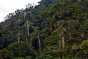Carajas_PA, Brasil...Floresta Nacional dos Carajas, Para...The Carajas National forest , Para. ..Foto: JOAO MARCOS ROSA / NITRO