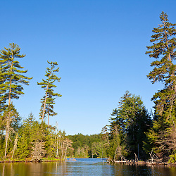White Pine trees on the shoreline of Perch Pond in Zack Woods, Wolcott, Vermont. Green River Reservoir State Park