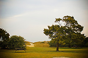 Tree with lone picnic table in the early morning hours at Huntington Beach State PArk in Murrells Inlet, South Carolina.