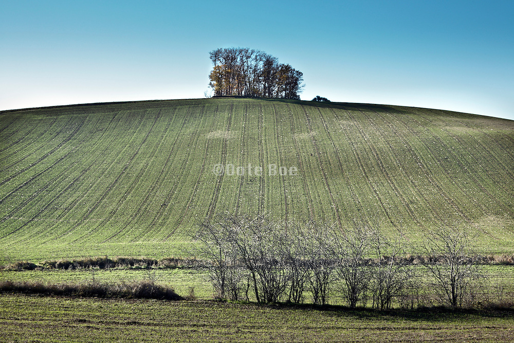 agricultural landscape view with little woods on top of the hill