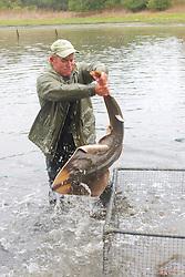 Sean Van Sommeran Putting Shovelnose Guitarfish Into Pen