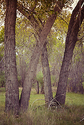 trees in New Mexico forest