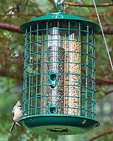 Tufted Titmouse. Image taken with a Leica T camera and 55-135 mm lens.
