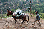 A man walks on a trail and guides a donkey with a load of groceries to be delivered to Our Lady of Qannoubine Monastery in the historic Qadisha Valley, Lebanon