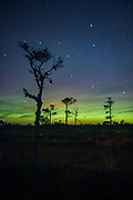 "Pine tree silhouettes and aurora lights in raised bog, nature reserve ""Niedrāju–Pilkas purvs"", Latvia Ⓒ Davis Ulands 