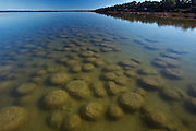 Thrombolites are living fossils from the Archean Period that are partly responsible for the oxygen in the atmosphere.  These Thrombolites are roughly 2000 years old
