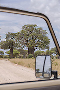 Scenic landscape with view of a savannah and a dirt road from a safari car in Tarangire National Park, Tanzania
