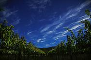 Evening sky over the Beckstoffer Bourn Vineyard in Saint Helena, California.