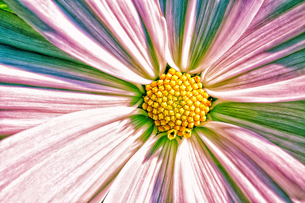 A little bit of rainbow hippy color in this macro flower