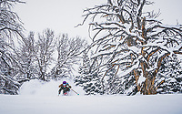 A late Jaunuary storm brings much needed snow to the Wasatch Mountains. Kaylin Richardson dancing with giants, Brighton backcountry, Utah.