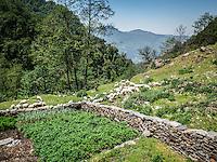 Views around Ever Green Rest Cottage on the Annapurna Dhaulagiri Trek.
