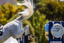 Guery Jerome, BEL, Grupo Prom Milton<br /> Grand Prix Longines De La Ville De La Baule<br /> CSIO La Baule 2021<br /> © Hippo Foto - Dirk Caremans<br />  13/06/2021