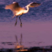 Bird - Panama City, FL