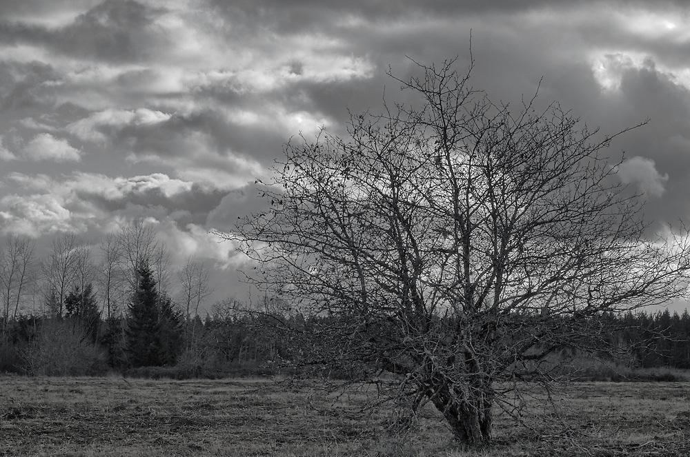 Winter Field Landscape HDR