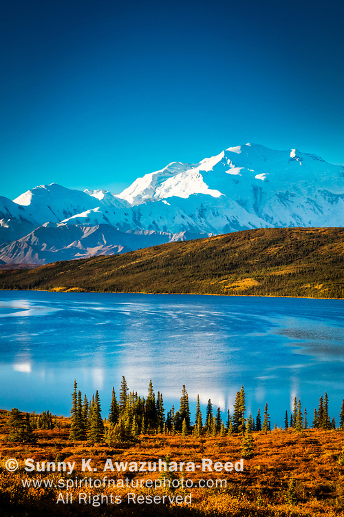 Mt. Denali (McKinley) reflects on Wonder Lake, surrounded with warm fall color tundra hill. Denali National Park & Preserve, Interior Alaska, Autumn. Vertical image.