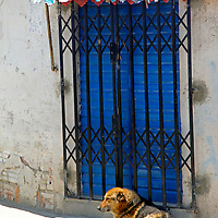 South America, Bolivia, La Paz. Dog of La Paz.