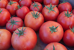 North America, United States, Washington, Kirkland, organic tomatos at Farmers Market