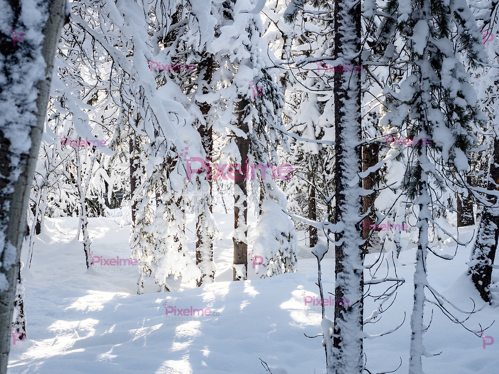 Trees covered with snow during the day