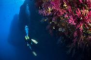 Divers and Gorgonians of Mediterranean sea.