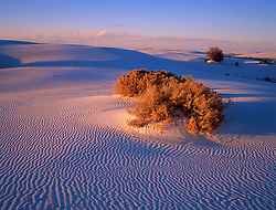 220 White Sands Burning Bush