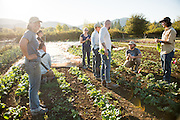 Farmers, researchers, chefs, and seed breeders discuss organic seed breeding in the kale field at Adaptive Seeds Farm in Sweet Home, OR.