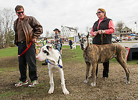 Mike and Lisa Brien with their great danes 5 month old puppy Cooper and 7 year old Rizzo during Saturday's Bow Wow Test at Opechee Inn and Spa.   (Karen Bobotas/for the Laconia Daily Sun)