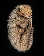 Wildlife Images - Oregon