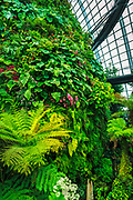 Lush vegitation in the Cloud Forest Dome, Gardens by the Bay, Singapore, Republic of Singapore