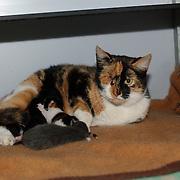 Gevonden poes met kittens met uitgestoken oog dierenasiel crailo Hilversum