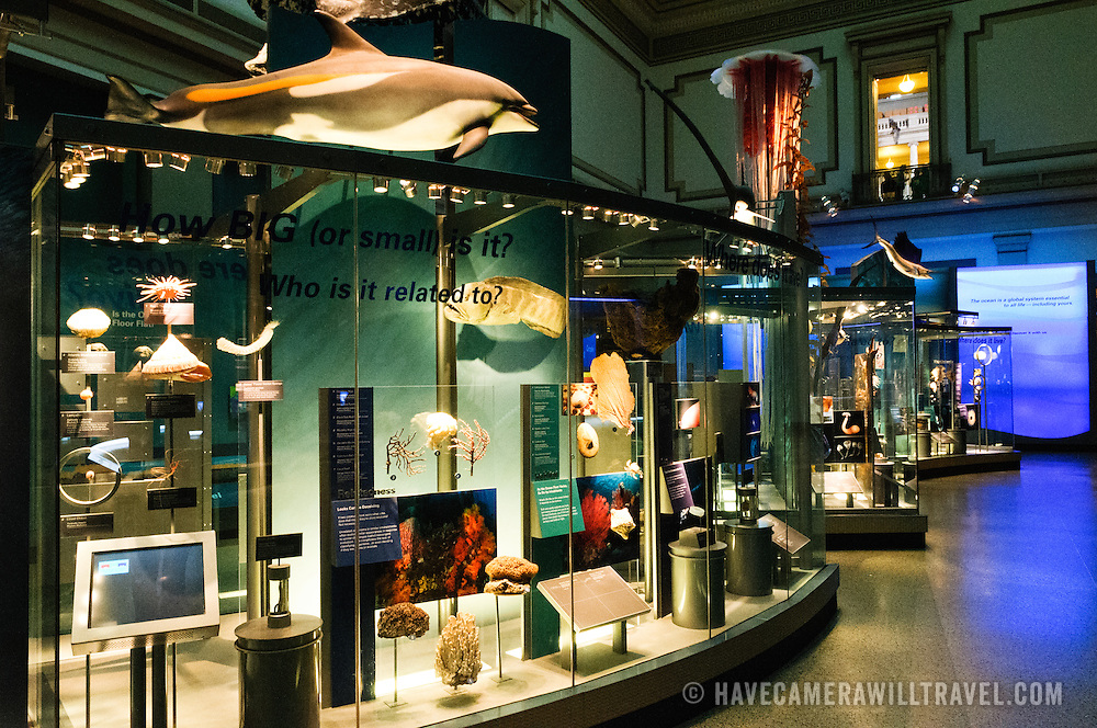 Marine life exhibit at the Smithsonian Institution's National Natural History Museum in Washington DC.