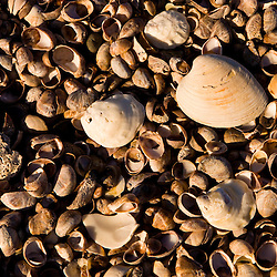 Shells on Long Beach in Stratford, Connecticut. Adjacent to the Great Meadows Unit of McKinney National Wildlife Refuge.