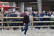 2017-03-tilleman-hengstenshow