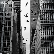 Birds flying in a nicely composed shoot