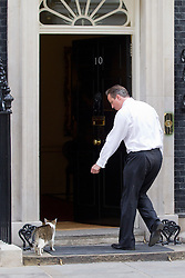 © Licensed to London News Pictures. 16/07/2013. London, UK. The British Prime Minister, David Cameron, shoos Larry, the Downing Street cat, through the door of Number 10. Photo credit: Matt Cetti-Roberts/LNP