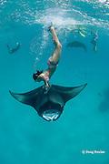 snorkeler dives to touch manta ray, Manta alfredi (formerly Manta birostris ), while guide takes photographs, Hanifaru Bay, Hanifaru Lagoon, Baa Atoll, Maldives ( Indian Ocean )